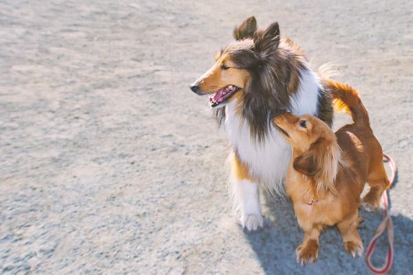 2頭の仲良しの犬